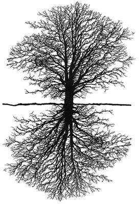 tree_mirror.jpg